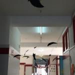 Los murciélagos se han colado por los pasillos de nuestro colegio....